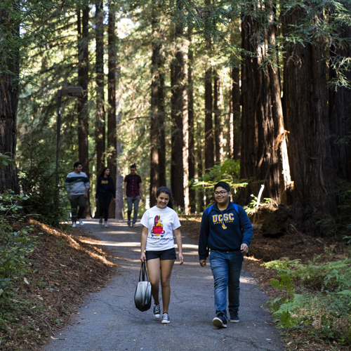 students walking in forest